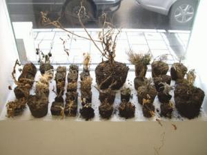 sopg växter.jpg